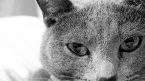 猫の目画像