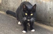 ミトン柄の猫