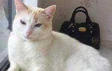 マグピー柄の猫