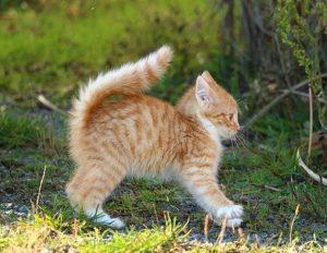 尻尾を膨らませている猫