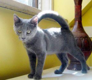 エアリアルカーブの猫