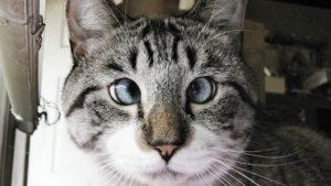 内斜視の猫