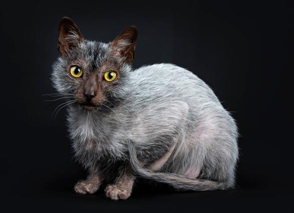 ライコイの被毛や目の色