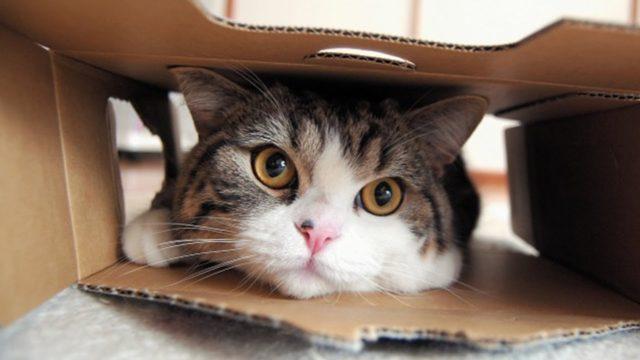 日本猫(和猫)を飼うのに気をつけること