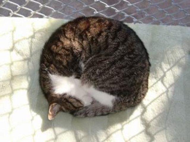 猫が丸まって寝る姿