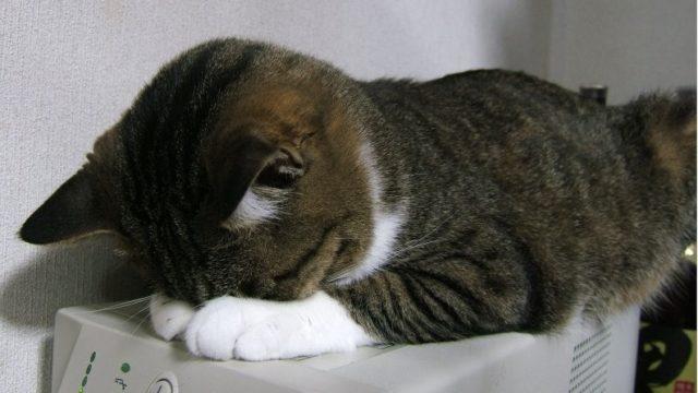猫が伏せて寝る姿