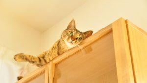 上から見下ろす猫