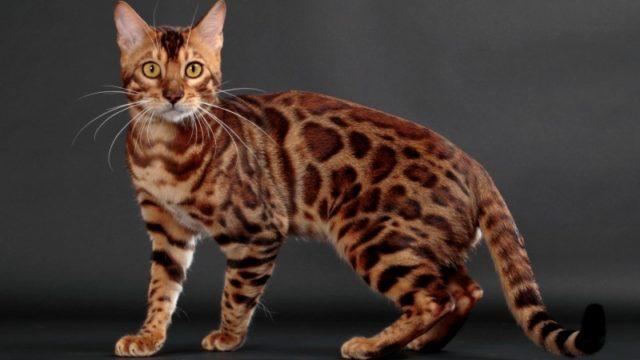 尻尾が長い猫