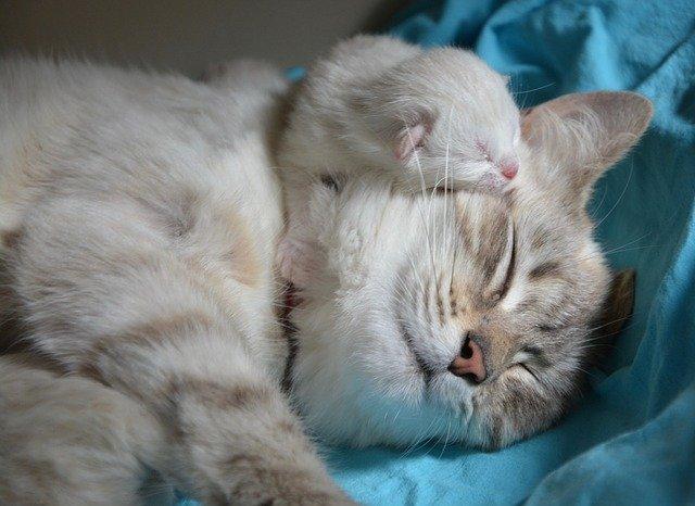 猫の授乳期(誕生~約生後4週目)