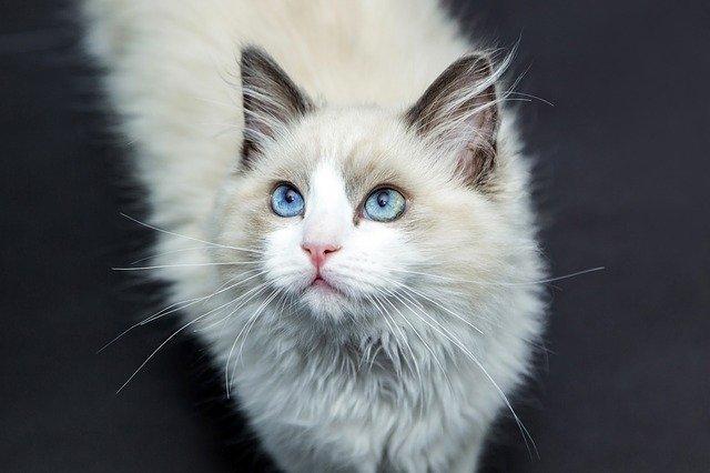猫の安定期(生後3年~生後9年:人年齢28~52歳)