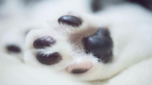 猫の足の裏