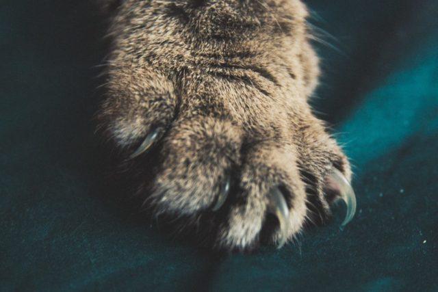 猫の爪について
