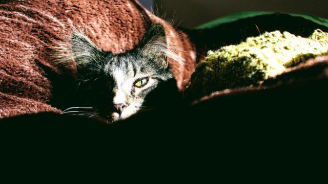 猫は夜行性なのか?