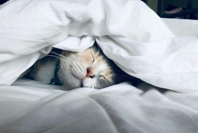 猫の活動時間