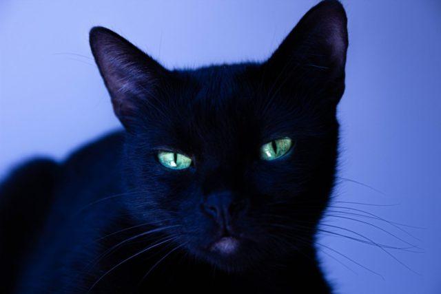 猫が夜に走り回るのはなぜ?