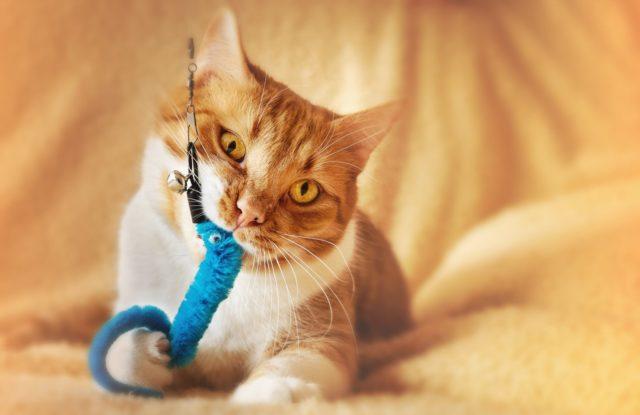 猫との遊び方