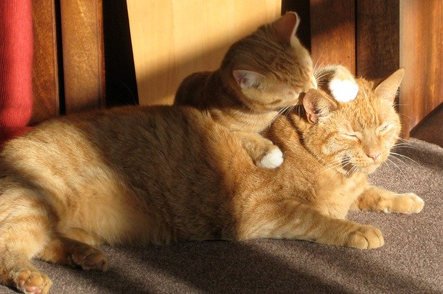 猫のグルーミングで気を付けること