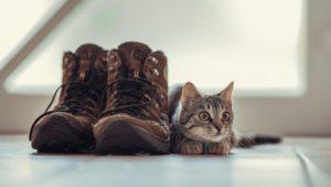 猫の臭い対策