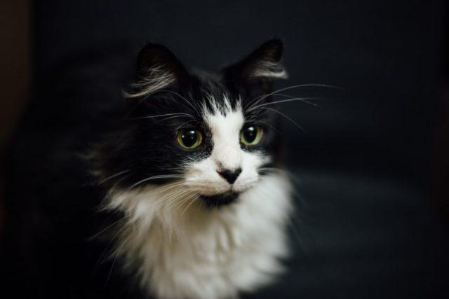 猫自体には臭いがほとんどない
