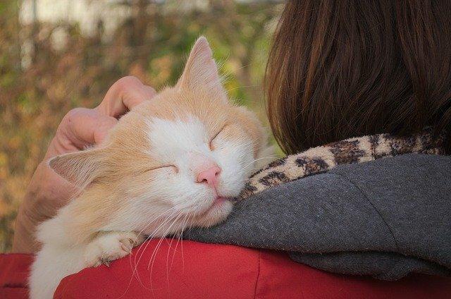 猫が抱っこされるのが好きになるタイミング