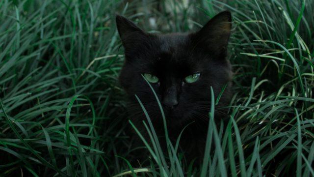 猫のやきもちや嫉妬の感情がある時の行動