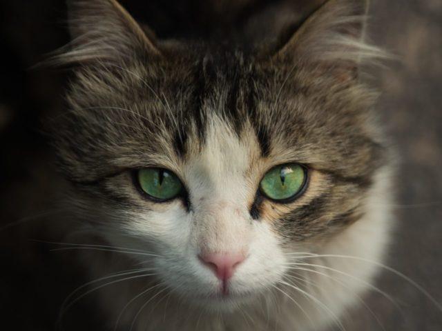 やきもちや嫉妬の感情がある猫の行動