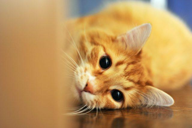 猫がハイテンションになる理由と対処方法