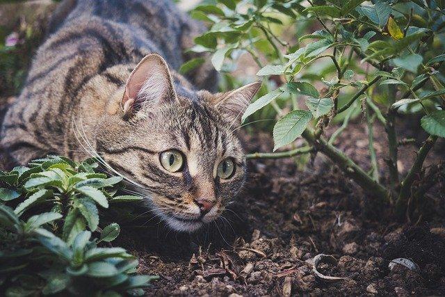 猫との信頼関係に影響を与える行動