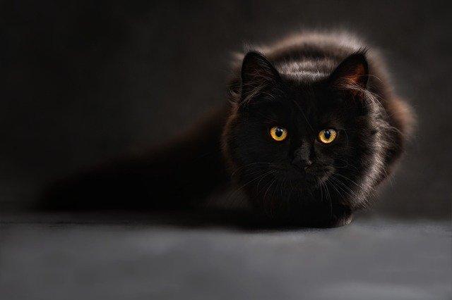 猫をなるべくストレスなく病院に連れていく方法