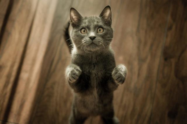 猫に芸を覚えさせる前に