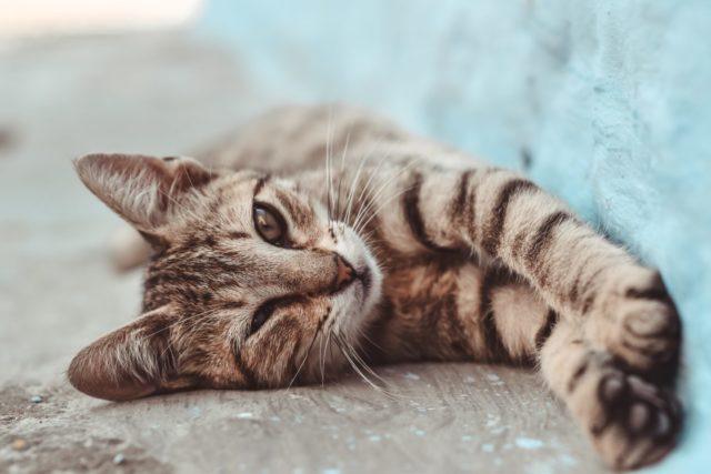 猫に芸を覚えさせる時に気を付けること