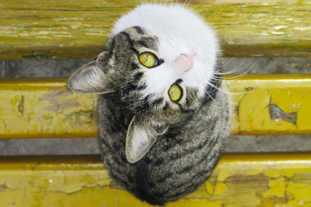 猫に芸を覚えさせることで応用出来ること