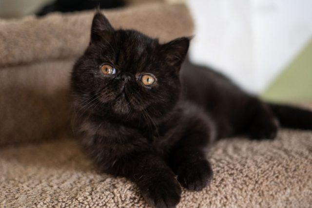 猫の老化を早める可能性のある行動