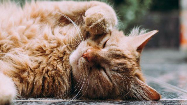 猫の老化を早める可能性のある飼い主の行動