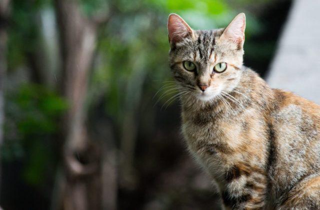 猫の里親の条件