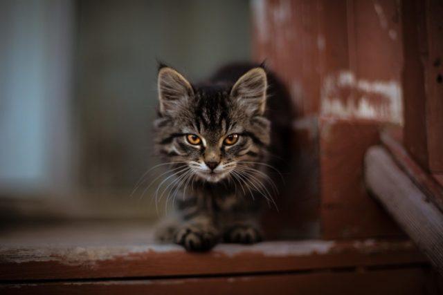 猫の里親になる条件はどうして厳しいのか