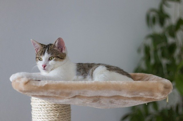 猫が喜ぶ部屋のために飼い主が出来ること