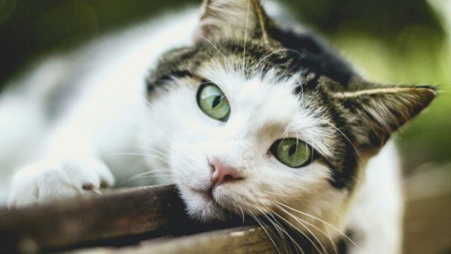 猫が甘える時の仕草