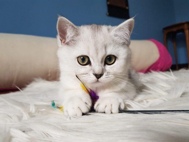 猫が甘えるタイミング