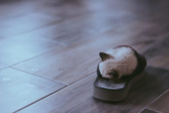 猫がスリッパを好きな理由