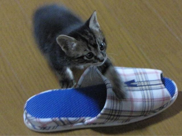 猫がスリッパを悪戯しないようにするには