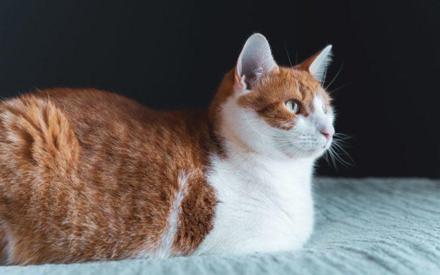 猫が発情する季節や年齢