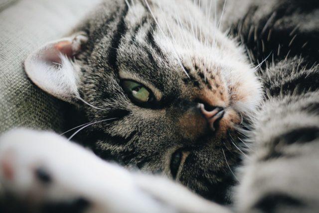 猫の発情期対策としてはいけないこと