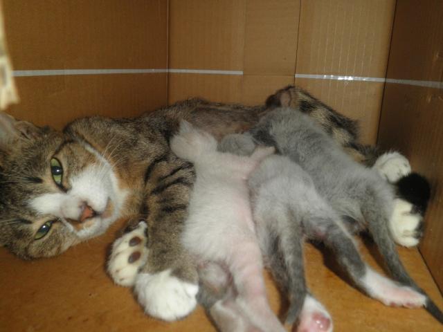 猫の出産についての知識
