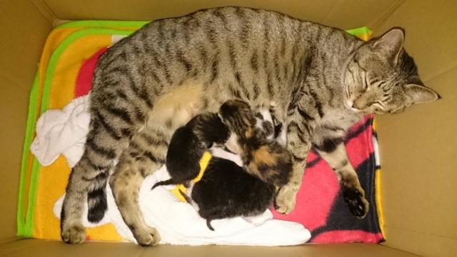 出産後の母猫の行動や病気