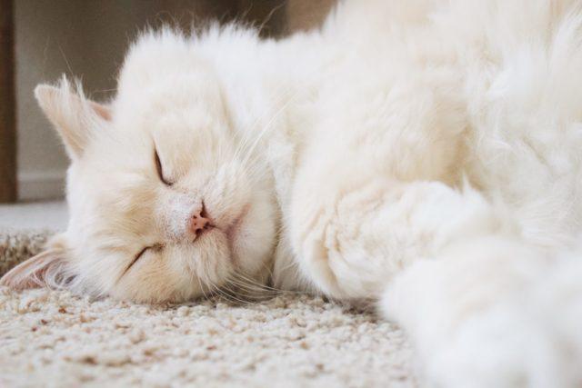 猫が一緒に寝たいと思うのはどんな人?