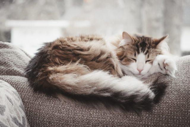 猫と一緒に寝る時に気を付けること