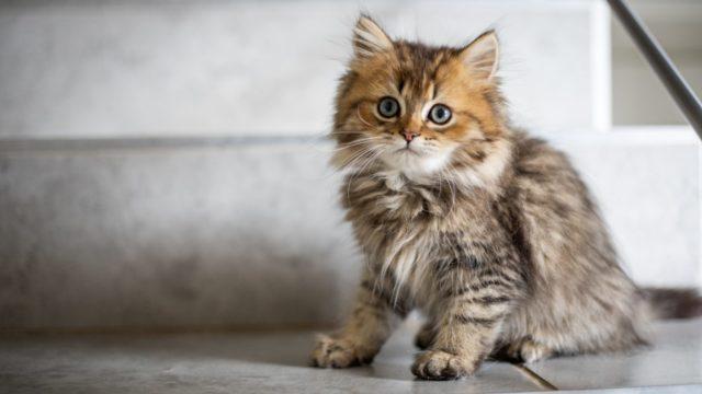 家で出来る猫の健康チェック方法
