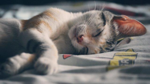 猫のいびき