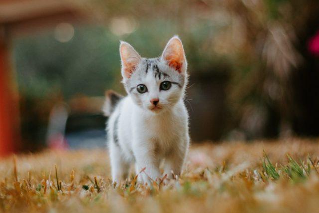 猫が分離不安症になった時の症状